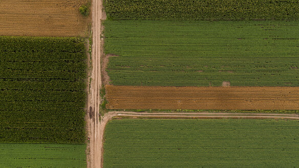 Serbia, Vojvodina, Aerial view of corn, wheat and soybean fields in the late summer afternoon - NOF00061