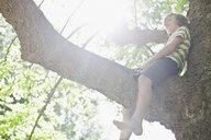 Smiling boy sitting in tree - CUF39242