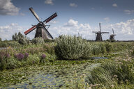 Windmills and canal marsh, Kinderdijk, Netherlands - CUF39545
