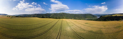 Germany, Rhineland-Palatinate, Bingen region, Henschhausen am Rhein, Panoramic view of grain fields - AMF05814