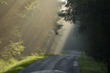 Empty country road through forest at twilight on misty day - RUEF01906