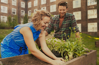Couple planting raised bed on council estate allotment - CUF39960