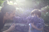 Mother and toddler son smelling bunch of lavender - CUF40028