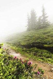 Fog rolling over rural dirt path - CUF40216