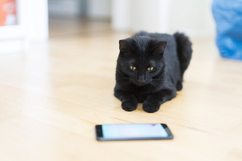 Black cat lying on the floor looking at cell phone - CHPF00493