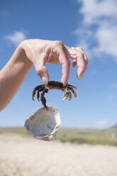 Hand holding crab, holding shell - JASF01898