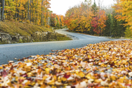 Canada, Ontario, main road through colorful trees in the Algonquin park area - WPEF00710