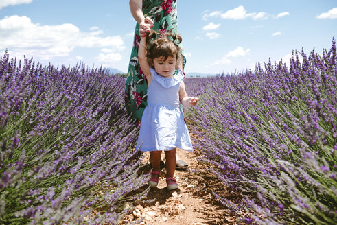 France, Provence, Valensole plateau, Mother and daughter walking among lavender fields in the summer - GEMF02121