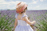 France, Provence, Valensole plateau, rear view of toddler girl standing in purple lavender fields in the summer - GEMF02133
