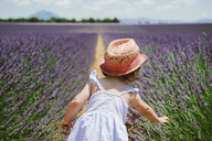 France, Provence, Valensole plateau, rear view of toddler girl standing in purple lavender fields in the summer - GEMF02139
