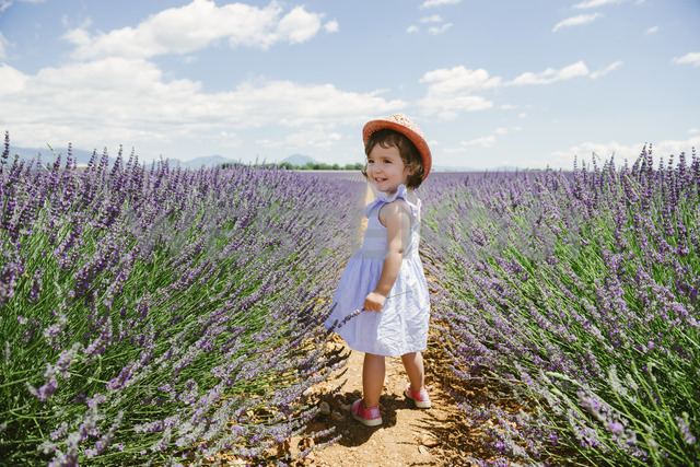 France, Provence, Valensole plateau, Happy toddler girl standing in purple lavender fields in the summer - GEMF02142