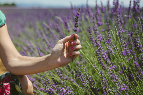 France, Provence, woman holding a lavender bloosom in field in the summer - GEMF02148