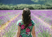 France, Provence, Valensole plateau, woman in lavender fields in the summer - GEMF02154
