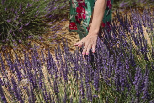 France, Provence, woman touching lavender bloosoms in field in the summer - GEMF02160