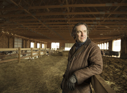An Organic Farm in Winter in Cold Spring, New York State. A farmer in a livestock barn with sheep at lambing time. - MINF00087