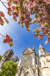 France, Paris, Notre Dame church in spring - WDF04704