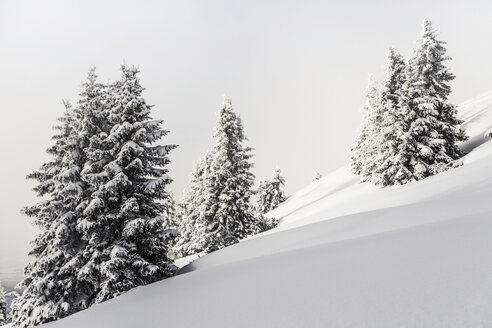 Fir trees in winter Reutte, Tyrol, Austria - CUF43588