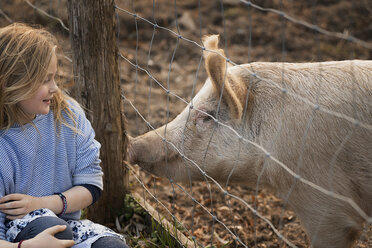 A pig in a paddock. Nuzzling against the fence for the attention of a young girl. - MINF00532