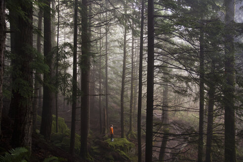 A man stands on a mossy rock overlooking a thick forest on a foggy morning near North Bend, Washington. - MINF00535