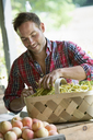 A farm stand with fresh organic vegetables and fruit.  A man sorting beans in a basket. - MINF00592