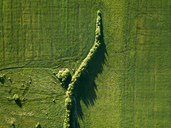 Russia, Central Russia, green field and trees - KNTF01143