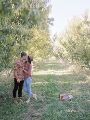 Apple orchard. A couple kissing. - MINF02278