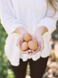 Apple orchard. Woman holding fresh eggs. - MINF02281