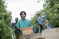 An organic orchard on a farm. A group of people picking green apples from the trees. - MINF02854