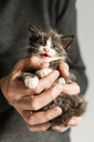 Man's hand holding miaowing kitten - NMSF00202