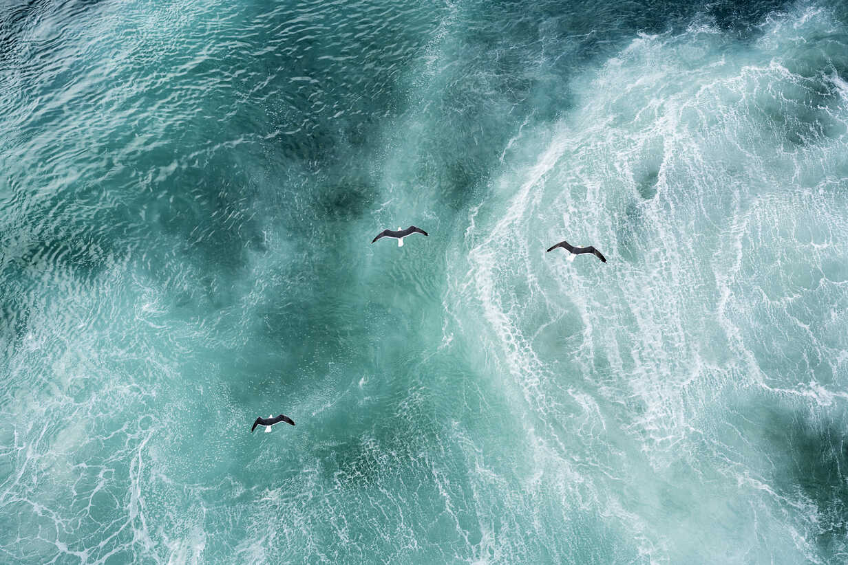 Three doves flying over North Atlantic - DMOF00042 - Dirk Moll/Westend61
