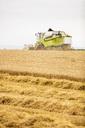 Serbia, Vojvodina, Combine harvesting wheat field - NOF00067