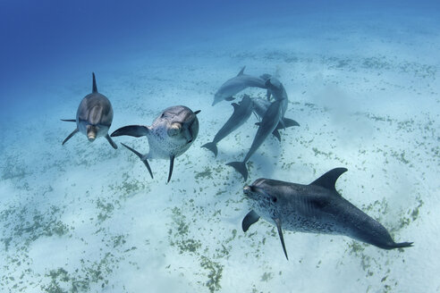 Dolphins swimming in tropical water - ISF17464