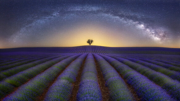 France, Alpes-de-Haute-Provence, Valensole, lavender field under milky way - RPSF00194