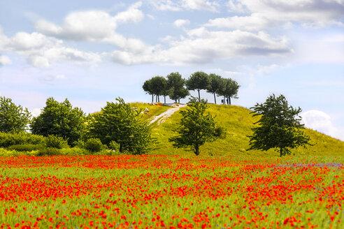 Germany, Lower Saxony, near Hannover, poppy field at Kronsberg - KLRF00648