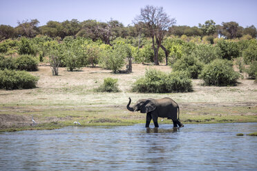 Botswana, Chobe elephant in water - DAWF00699