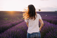 France, Valensole, back view of woman standing in front of lavender field at sunset - GEMF02227