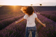 France, Valensole, back view of woman standing in front of lavender field at sunset - GEMF02230