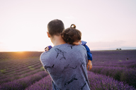France, Valensole, back view of father holding his little daughter in front of lavender field at sunset - GEMF02233