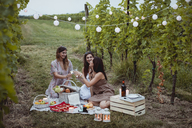 Friends having a summer picnic in vineyard - MAUF01634