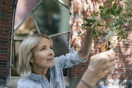 Mature woman pruning branch in garden - JOSF02472