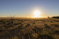 Africa, Namibia, Etosha National Park, Landscape, steppe at sunrise - FOF09984