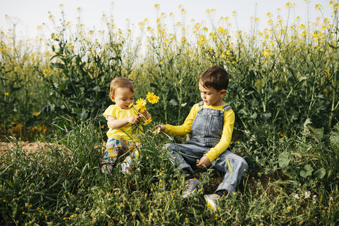 Little boy and baby girl sitting on a meadow with bunch of picked flowers - JRFF01780