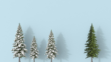3D rendering, Row of snow covered fir trees blue on background, with a green one , standing aout - UWF01466