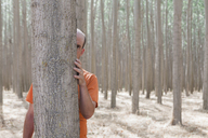 Man peering from behind a poplar tree trunk on a commercial tree farm. - MINF05890