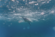 Maledives, Indian Ocean, surfer sitting on surfboard, underwater shot - KNTF01202