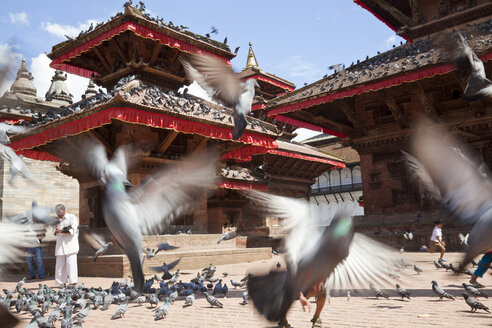 Open courtyard with Buddhist temples, large group of pigeons. - MINF06595