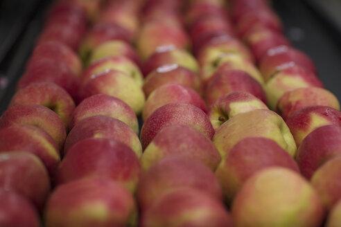 Apples in factory on conveyor belt - ZEF15925