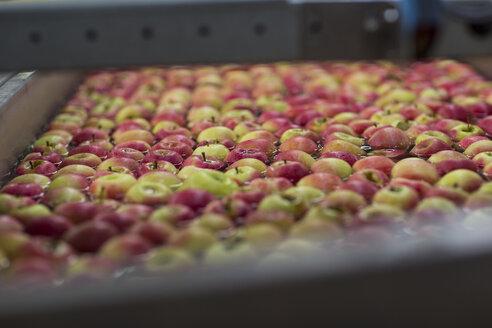 Apple factory, apples in water - ZEF15940
