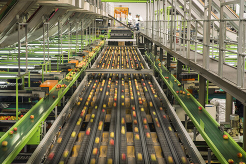 Apple factory, sorting machine - ZEF15943