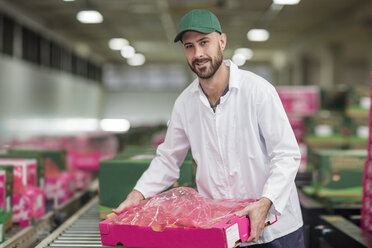 Worker packing apple boxes - ZEF15947